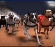 Köpek Yarışları - Greyhound Racing