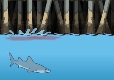 Köpekbalığı Besleme