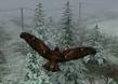 Kuş Gibi Uçmak 3