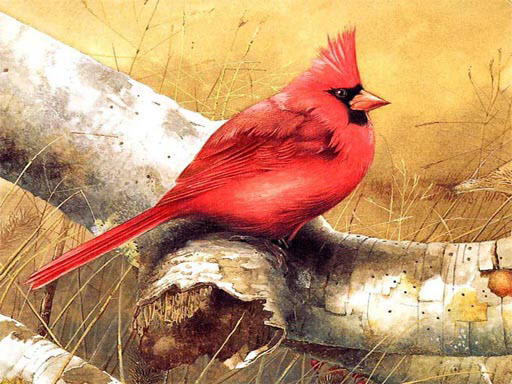 Kuş Yapbozu